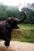 elephant_tarra2