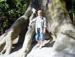 redwood21