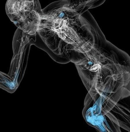 human-anatomy-07
