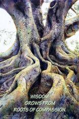 rootsofcompassion