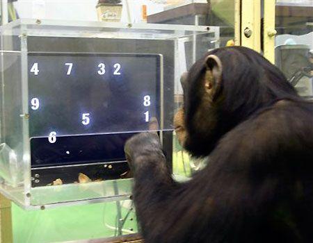 chimp_memory