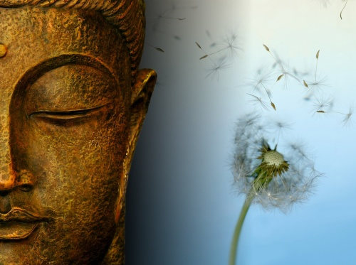 buddha-dandelion