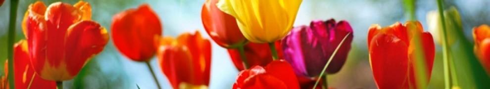cropped-flowers-spring.jpg