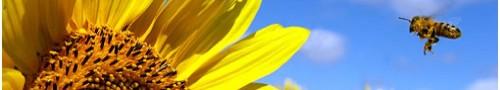 cropped-sunflowerbee.jpg