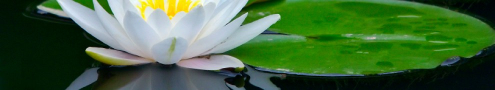 cropped-lotus_flower_pond.jpg