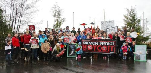 salmon-feedlot-protest