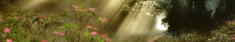 cropped-the_light_of_morning.jpg