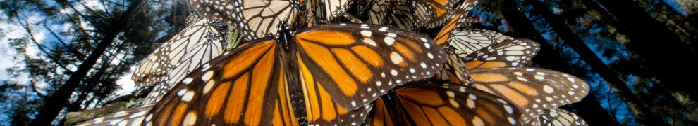 cropped-monarch-glen4.jpg