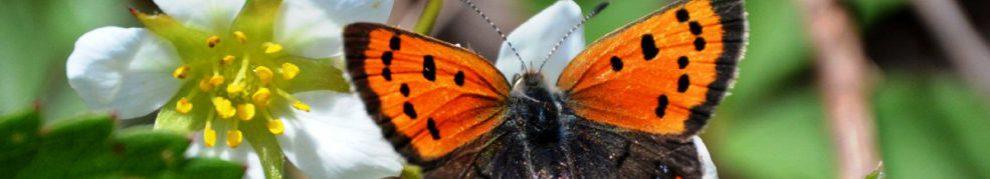 cropped-cropped-butterflies1b.jpg