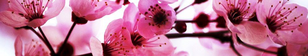 cropped-cropped-cherry_blossoms1.jpg