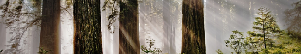 cropped-redwoods2.png