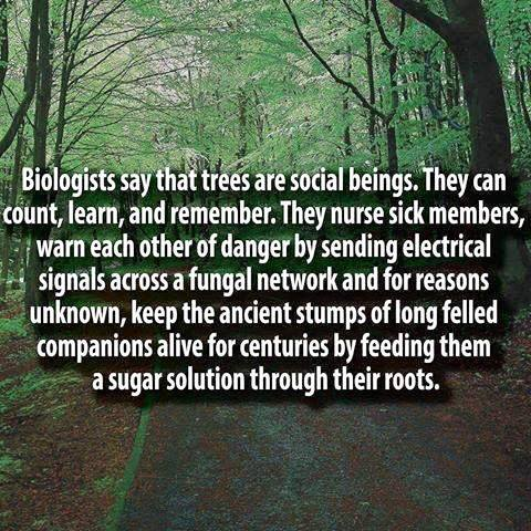 trees-are-social-beings